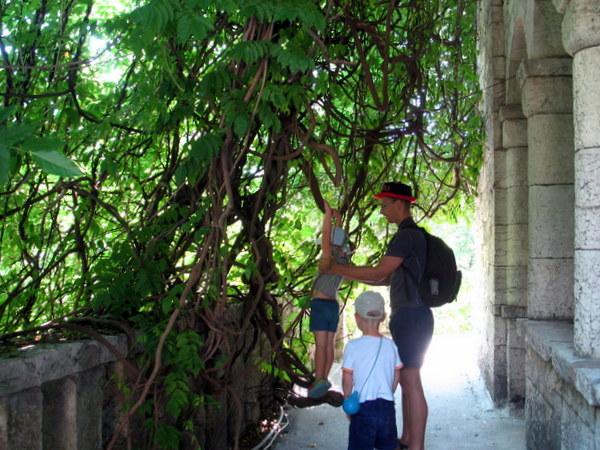 Лианы на Ахунской башне