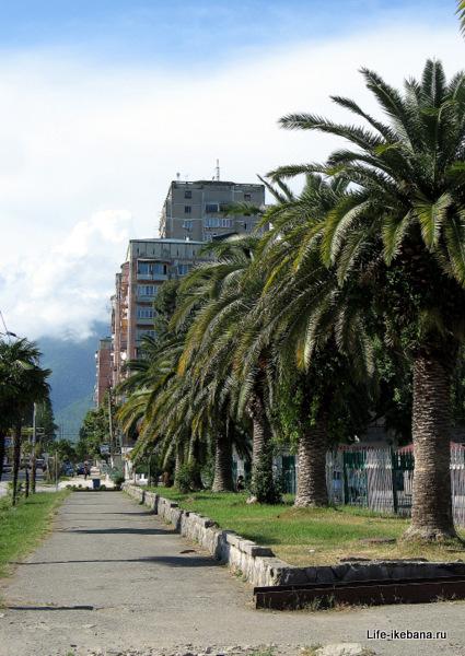 пальмы у рынка