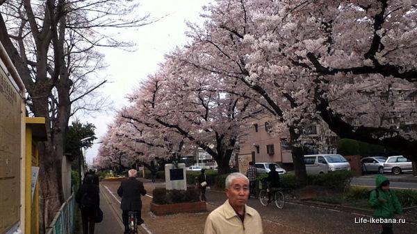 Улица в Токио