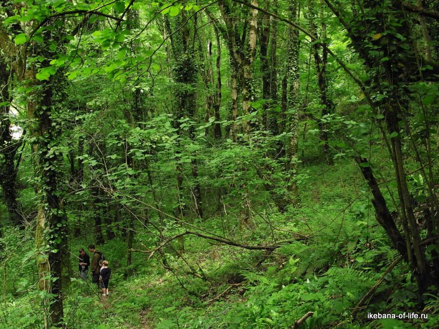 Агурский лес