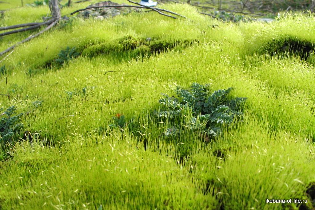потрясающий мох
