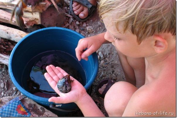 как приготовить мидий в походных условиях