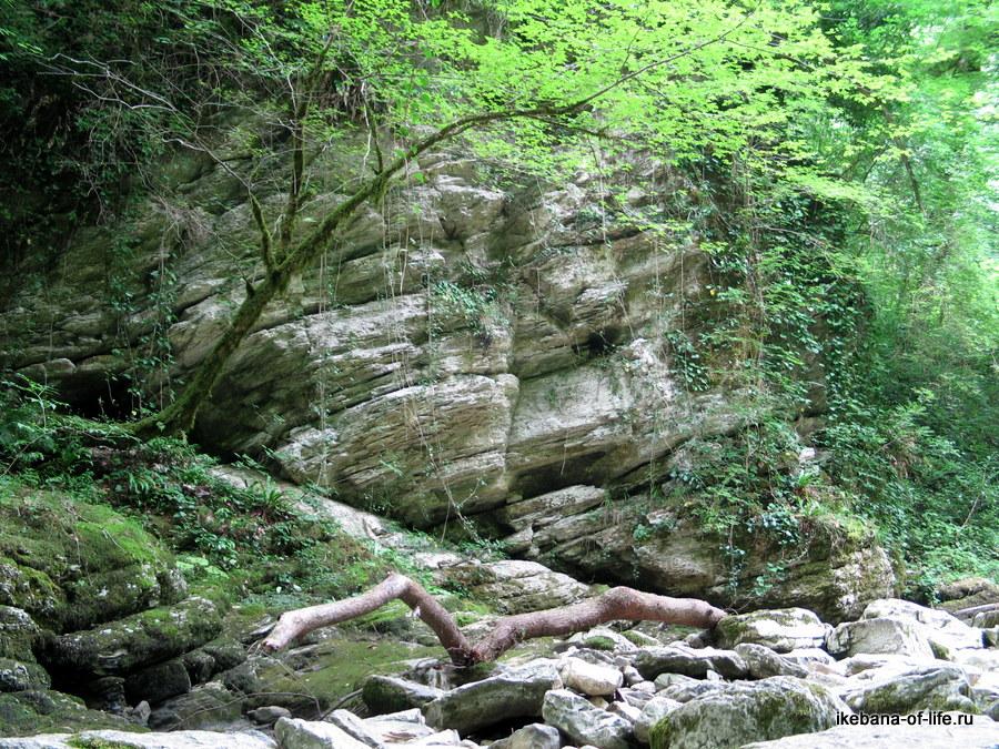 живописное агурское ущелье