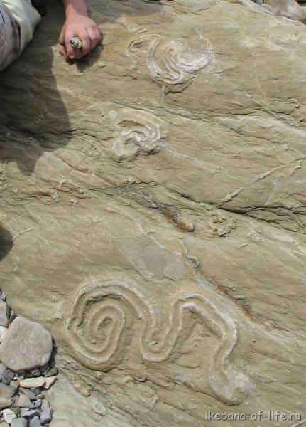 отпечатки древних ископаемых
